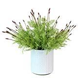 Offer for MARLLES Artificial Flowers Lavender Bundles - 16