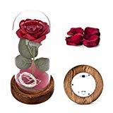 Offer for Beauty and The Beast Rose Kit, Red Silk Rose and Led Light with Fallen Petals in Glass Dome on Wooden Base for Home Decor Holiday Party Wedding Anniversary