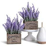 Offer for Butterfly Craze Artificial Lavender Potted Plant, Rustic Farm House Decor for Home, Kitchen, and Office, Ideal Silk Flower Arrangements, Set of Two