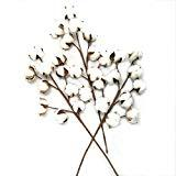Offer for Gracebuy 3 Pack 10 Boll Per Stem 20 inch Cotton Stems Rustic Farmhouse Decoration Flowers