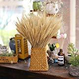 Offer for EOSAGA Golden Dried Wheat Sheaves 100 Stems Bundle Premium Autumn Arrangements Full Wholesale DIY Home Table Wedding Xmas